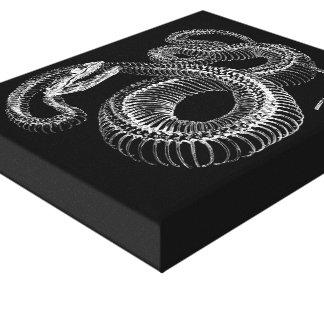 Esqueleto de la serpiente de cascabel lona envuelta para galerías