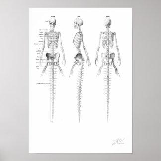 Esqueleto de la sirena poster