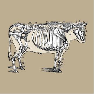 Esqueleto de la vaca del vintage esculturas fotograficas