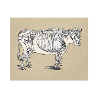 Esqueleto de la vaca del vintage lona envuelta para galerías
