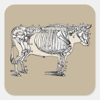 Esqueleto de la vaca del vintage pegatina cuadrada