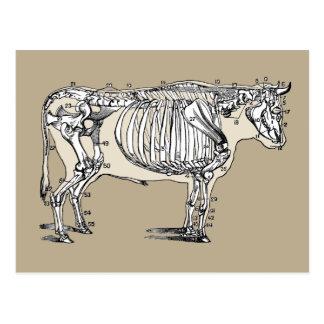 Esqueleto de la vaca del vintage tarjeta postal