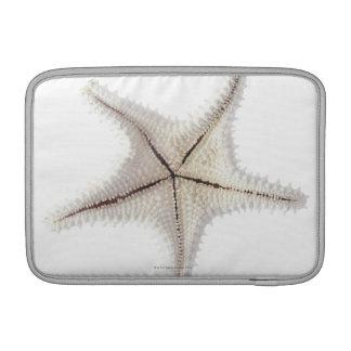 Esqueleto de las estrellas de mar, primer fundas macbook air