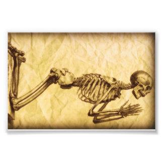Esqueleto de rogación a la derecha cojinete
