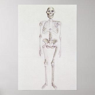 Esqueleto del africanus del australopiteco impresiones