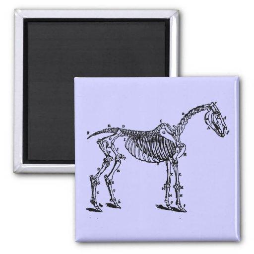 esqueleto del caballo imán para frigorifico