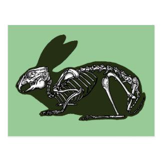 esqueleto del conejo postal