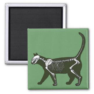 Esqueleto del gato imán cuadrado
