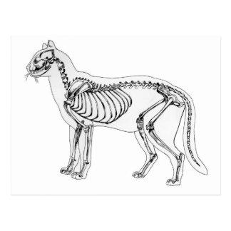 Esqueleto del gato tarjeta postal