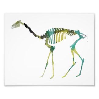 esqueleto del oxydactylus fotografías