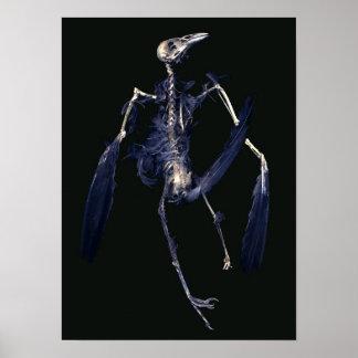 Esqueleto del pájaro posters