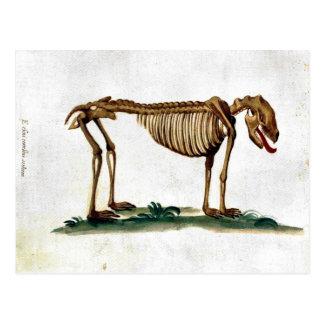 Esqueleto del perro del vintage postal