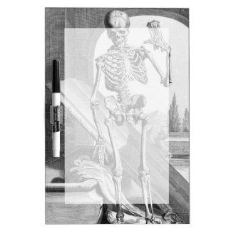 Esqueleto del vintage pizarras blancas de calidad