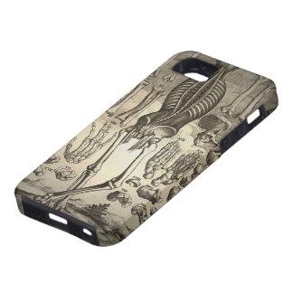Esqueleto humano Ca 1741 iPhone 5 Protectores
