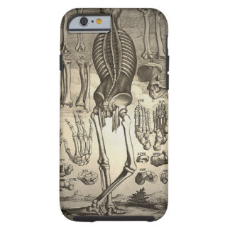 Esqueleto humano Ca 1741 Funda De iPhone 6 Tough