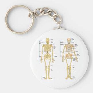 Esqueleto humano etiquetado carta de la anatomía llavero redondo tipo pin