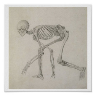 Esqueleto humano: Visión lateral en postura que se Poster