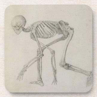 Esqueleto humano: Visión lateral en postura que se Posavaso