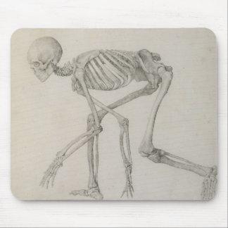 Esqueleto humano Visión lateral en postura que se Tapete De Ratón