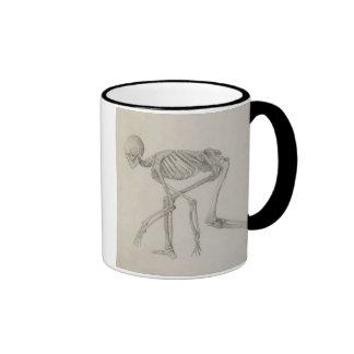 Esqueleto humano: Visión lateral en postura que se Taza De Café