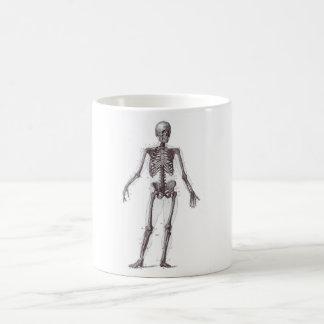 Esqueleto lleno