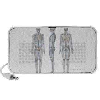 Esqueleto masculino 2 iPhone altavoz