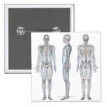 Esqueleto masculino 2 pin cuadrada 5 cm