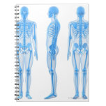Esqueleto masculino cuadernos