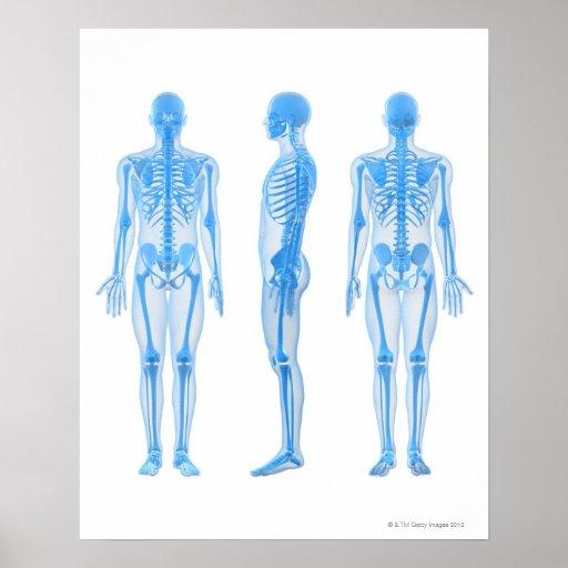 Esqueleto masculino poster