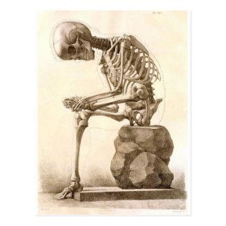 esqueleto tarjeta postal