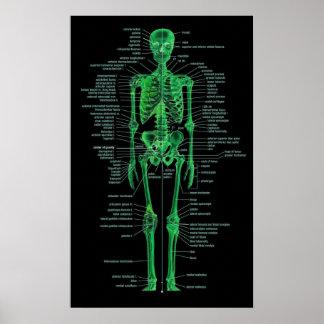 esqueleto verde póster