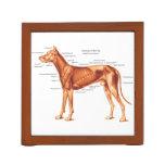 Esqueleto y músculos de la anatomía del perro