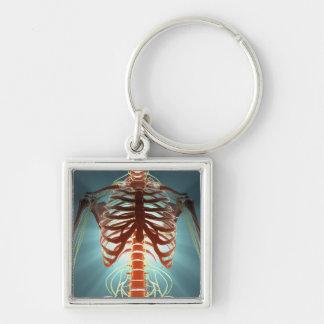 Esqueleto y nervios llavero cuadrado plateado