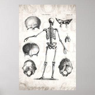 Esqueletos antiguos esqueléticos de la anatomía de impresiones