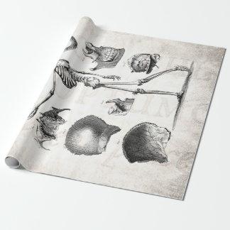 Esqueletos antiguos esqueléticos de la anatomía de papel de regalo