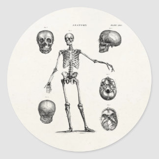 Esqueletos antiguos esqueléticos de la anatomía de etiqueta redonda