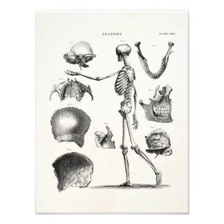 Esqueletos antiguos esqueléticos de la anatomía de arte con fotos