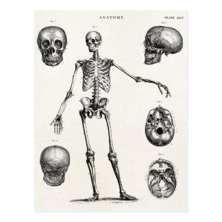 Esqueletos antiguos esqueléticos de la anatomía de postales