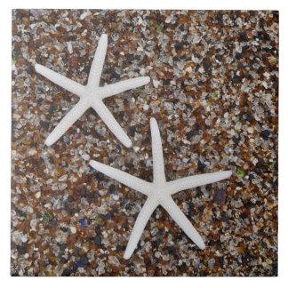 Esqueletos de las estrellas de mar en la playa de azulejo cerámica