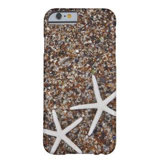 Esqueletos de las estrellas de mar en la playa de funda de iPhone 6 barely there