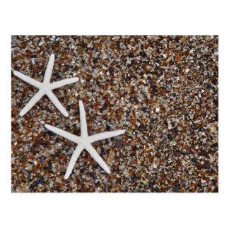 Esqueletos de las estrellas de mar en la playa de postales