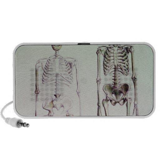 Esqueletos del australopiteco Boisei Notebook Altavoz