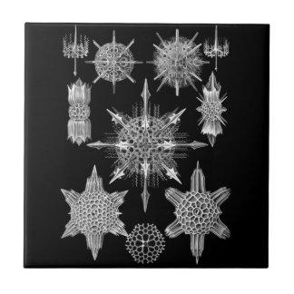 Esqueletos del plancton en blanco y negro azulejo cuadrado pequeño