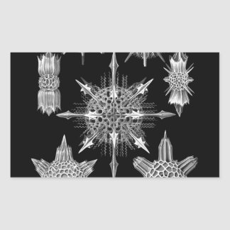 Esqueletos del plancton en blanco y negro rectangular pegatinas