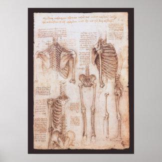 Esqueletos humanos de la anatomía de Leondardo da Póster