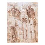 Esqueletos humanos Leonardo da Vinci de los dibujo Postal