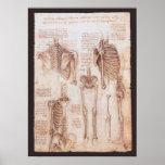 Esqueletos humanos Leonardo da Vinci de los Impresiones