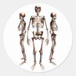 Esqueletos Pegatina Redonda