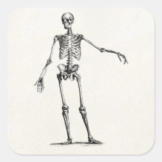 Esqueletos retros esqueléticos de la anatomía de pegatina cuadrada