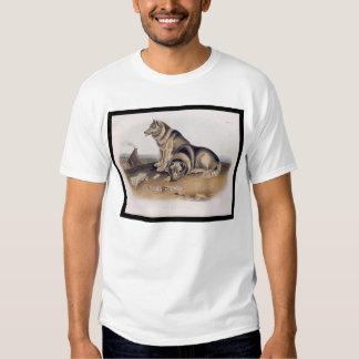 Esquimaux Dog T Shirt
